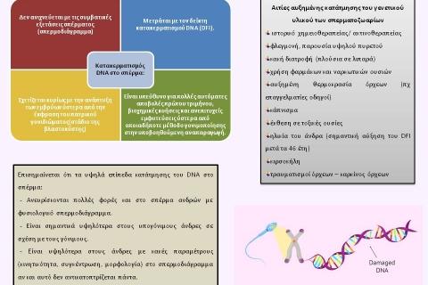 To DNA fragmentation και ο ρόλος του στην ανδρική υπογονιμότητα
